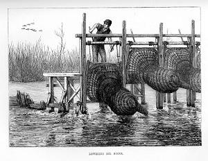 Eel buck traps