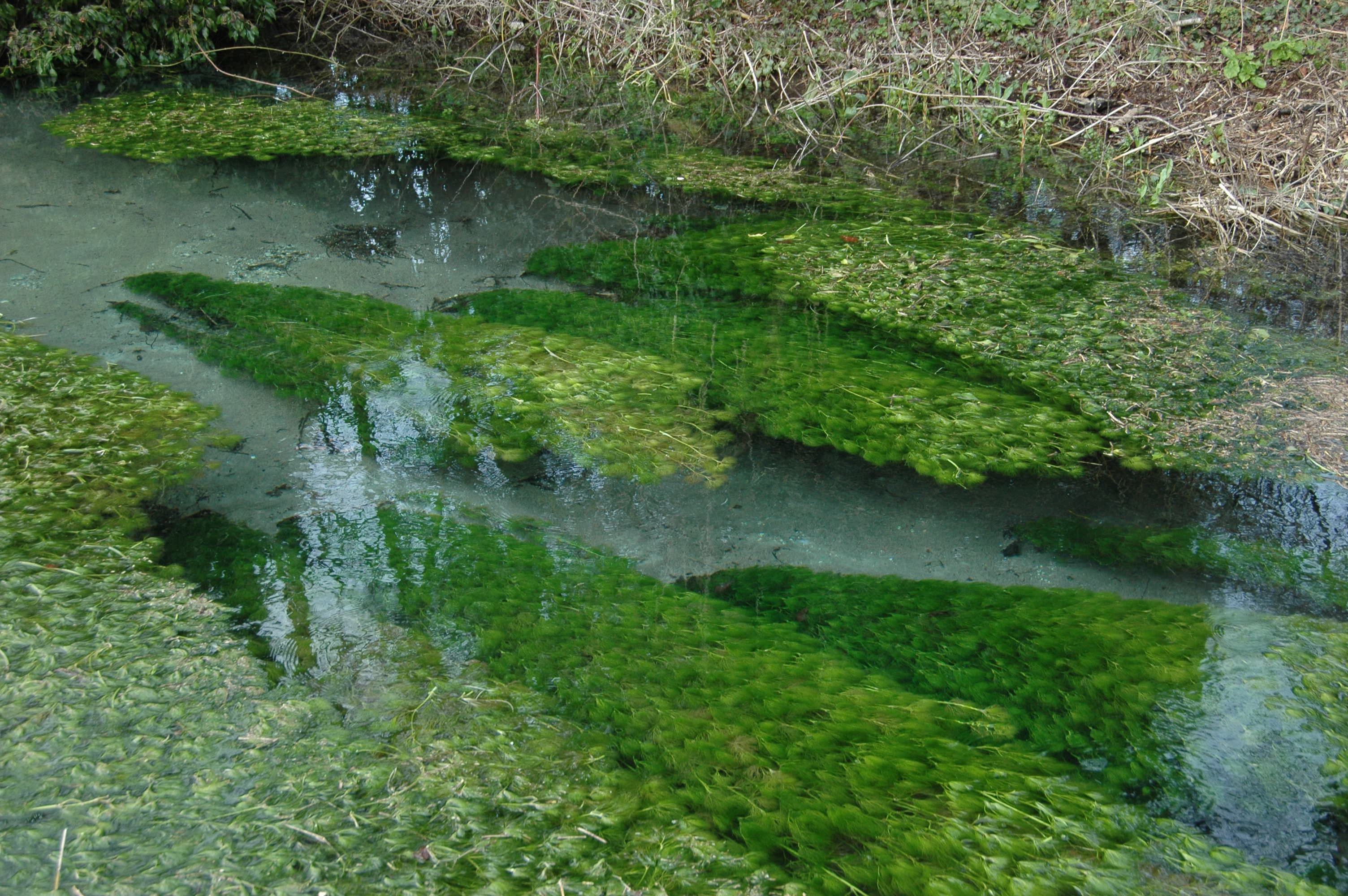 Life of a chalkstream for Fish and stream