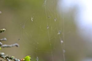 Meon cobweb